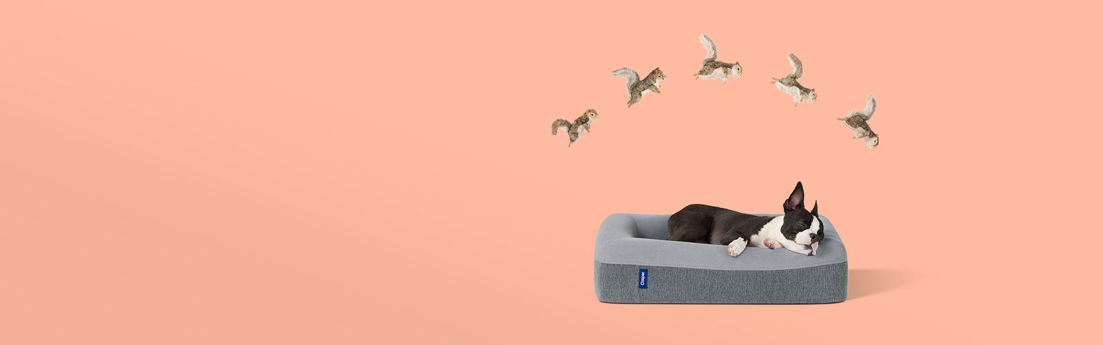 wicker dog bed
